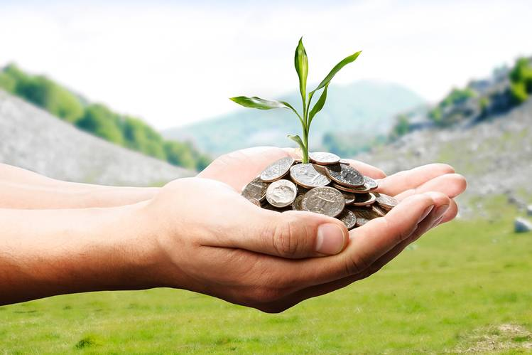 a person holding coins and plant in hands